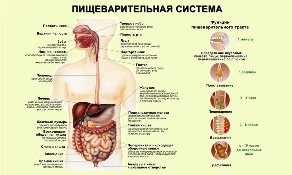 Пирогенал в лечении простатита отзывы