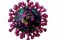 Как противостоять ОРВИ и коронавирусной инфекции